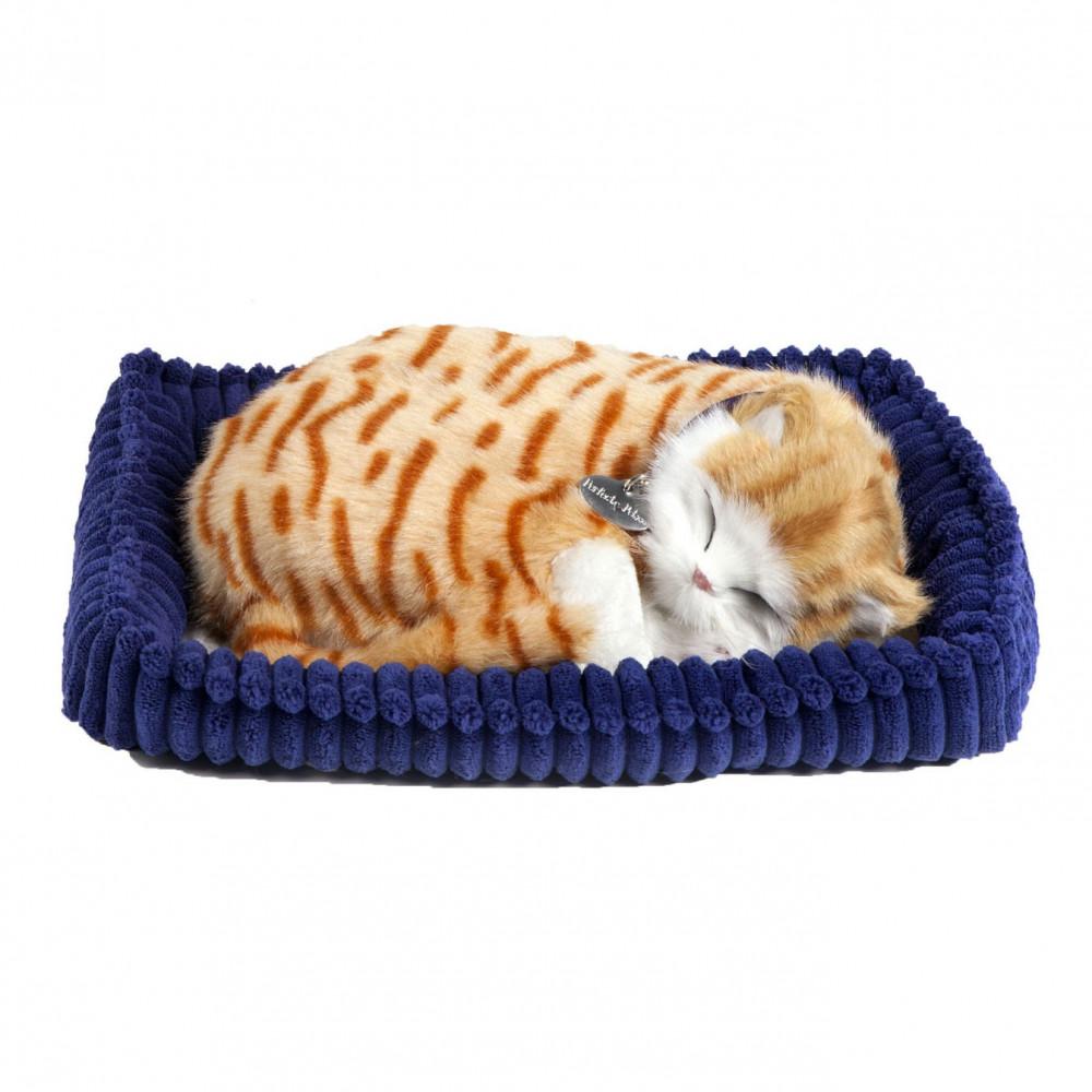 Perfect Petzzz Soft Oranje Kat