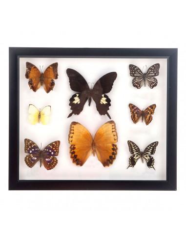 Houten Lijst met 8 Opgezette Vlinders